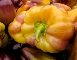 Gold and purple bell pepper