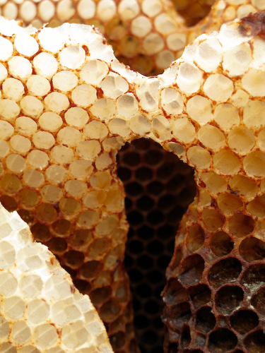 Free-form honeycomb with an arched structure